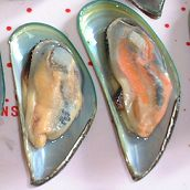 Boiled Greenshell Mussels in Half Shell