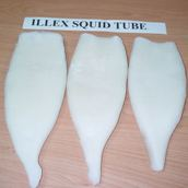 Illex Squid Tube